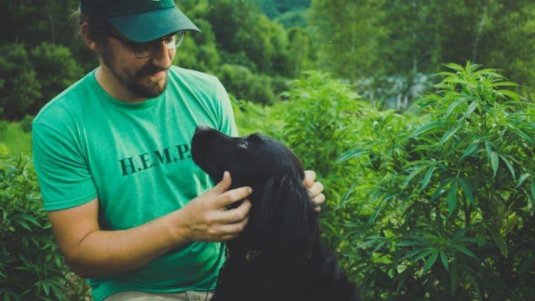 Colin petting a dog in a hemp field