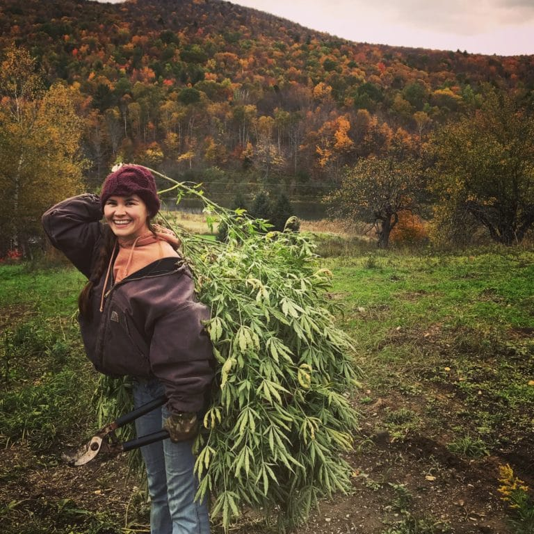 Erin harvesting hemp on a fall day. Hillside tree foliage changing colors