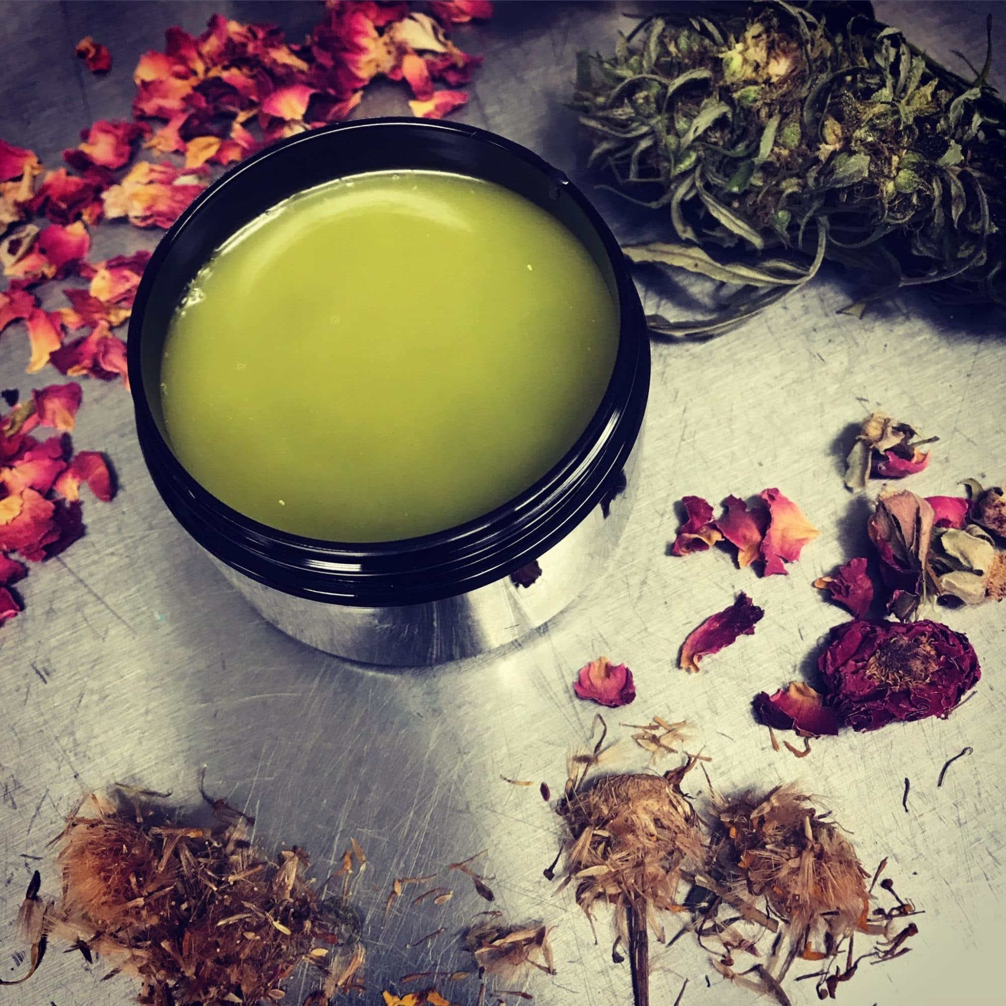 CBD Herbal Salve hardening while surrounded by herbs including pink roses, horsetail and hemp on a stainless steel table